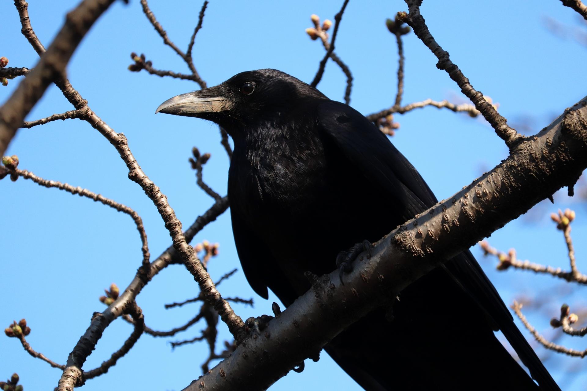 日本でよく見かける鳥